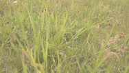 Stock Video Footage of Follow walk green grass meadow pasture wildflower pov point of view hunter wild