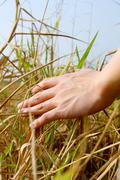 Close up of a man's hand touching the grass, 'feeling nature' Stock Photos