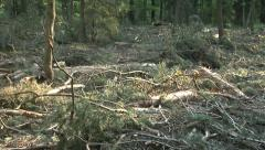 Devastation of forest by the logging industry Stock Footage