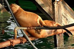 Seals Pause Stock Photos