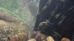Hilliard Falls Behind Cascade Loop Stock Footage
