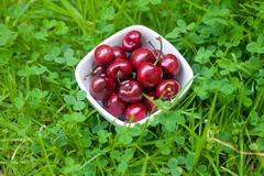 cherries in a ceramic bowl on green grass - stock photo