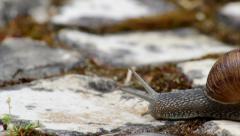 Comum Garden Snail crawling D1-55s Stock Footage