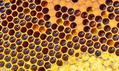 fresh honeycomb - stock photo
