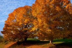 Fall season - Mount Rogers National Recreation Area, VA Stock Photos