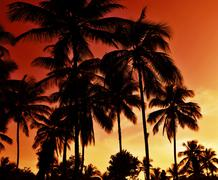 Dark palm tree silhouettes at sunset Stock Photos