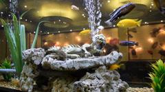 Fish Swimming in Aquarium Stock Footage
