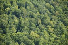 Beech forest canopy as seen from above - stock photo