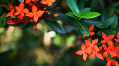 Landscape view of small Red flowers. Video with shift, change in focus and bokeh Stock Footage