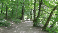 Stock Video Footage of 13 Idyllic forest path, man on bicycle