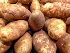 Large Russet Potatoes Stock Photos