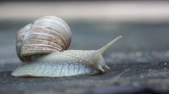 Snail moving on concrete 003 Stock Footage