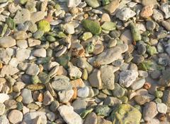 Green pebble rocks Stock Photos