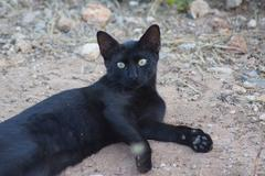 Feral Domestic Cat - stock photo