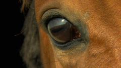 Horse's eye in macro Stock Footage