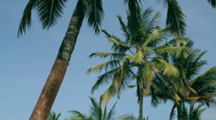 Palm trees in exoticm place Stock Footage