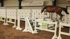 Horse jumping Stock Footage