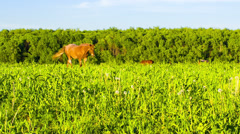 Horse on a green meadow Stock Footage