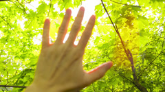 Sun's rays through fingers palm Stock Footage