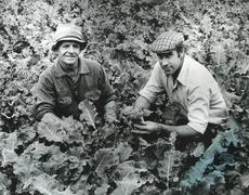 Stock Photo of 1980s farmers check crop