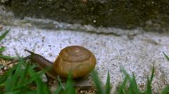 Crawler snail on the grass. Macro video Stock Footage