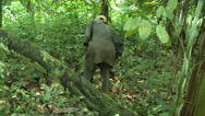 Stock Video Footage of Man Clearing Brush in Forest with Machete in Rural Ghana