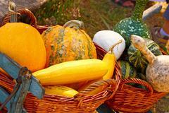 Decorative gourds Stock Photos
