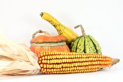 Stock Photo of Colorful gourds with maize