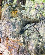 Funny mystery fairy forest troll lichens covered Stock Photos