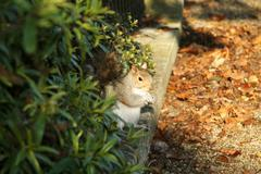 Little squirrel between bushes and fallen leaves Stock Photos