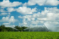 Irrigating crops in field - stock photo