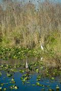 Everglades in Miami Stock Photos