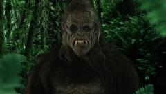 BIGFOOT the SASQUATCH - stock footage
