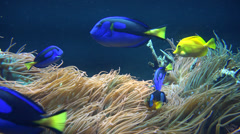 Fish, Sea Life, Aquariums, Animals, Nature Stock Footage
