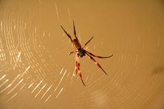 Spider on its web - stock photo