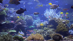 Aquarium, Fish Tank, Marine Animals - stock footage