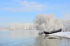 Frosty winter trees near Danube river - stock photo