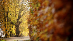 Hedge in autumn Stock Footage