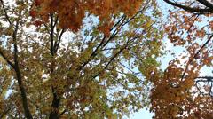 Autumn trees slidershot Stock Footage