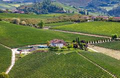 winery and green vineyards on the hill in italy. - stock photo