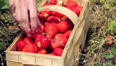 Filling basket with strawberries Stock Footage