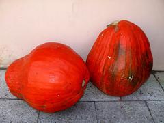 Stock Photo of two big orange pumpkins