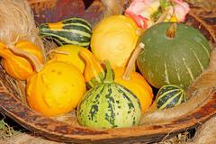 Decorative gourd Stock Photos
