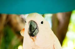 Colourful parrot bird sitting on the perch Stock Photos