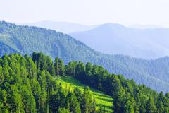 mountains  with cedar  forest - stock photo