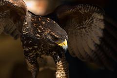 Open wings - stock photo