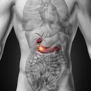 Gallbladder / Pancreas - Male anatomy of human organs - x-ray view Kuvituskuvat
