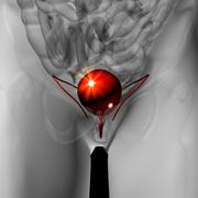Bladder - Male anatomy of human organs - x-ray view - stock photo