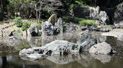 Japanese garden at Shinjuku national park, Tokyo Japan Stock Footage