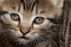 Tabby kitten Stock Photos